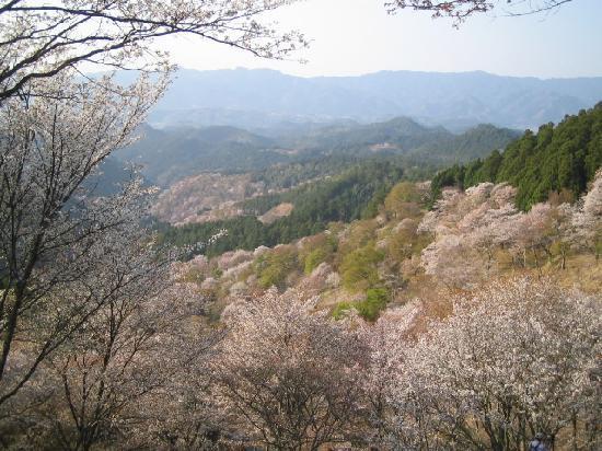 Yoshino-cho, Japão: 上千本、花矢倉