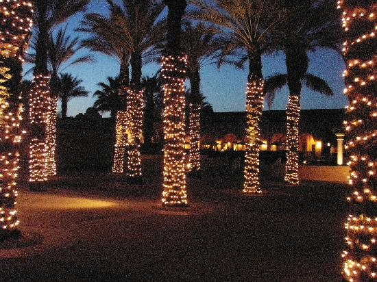 the westin mission hills villas lighted palm trees near fire pit