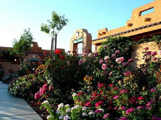 Green Valley Spa and Resort: 10,000 roses make the spring bloom!