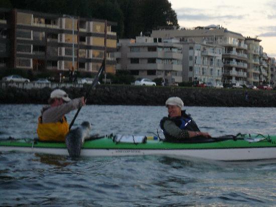 Alki Kayak Tours: Harbor Seal hauling out on our kayak!