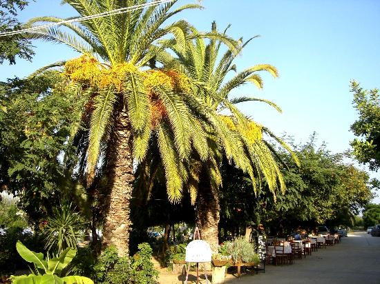 Gialova, Greece: The Restaurant