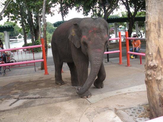 Dusit Zoo: elephant