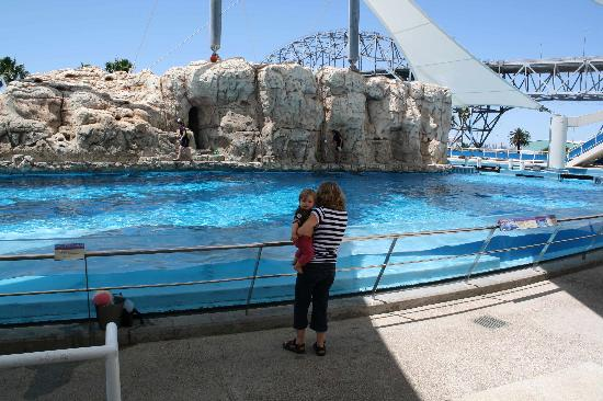 Texas State Aquarium: Dolphin Bay
