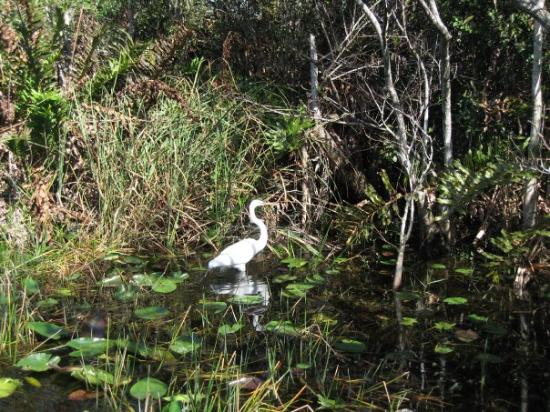 Miccosukee, Φλόριντα: Everglades