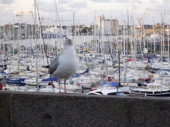 Saint-Malo, Frankrike: DSCN2484