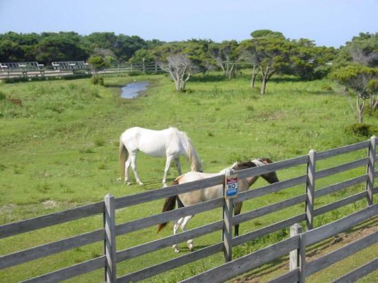 Ocracoke Pony Pens Photo