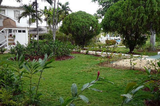Royal Decameron Montego Beach : Végétation à l'avant de l'hotel