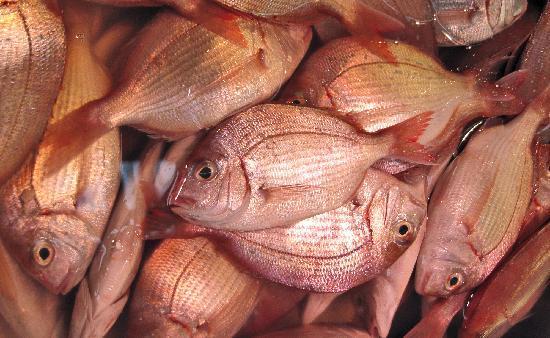 The Tsukiji Market: Tsukiji Fish 1