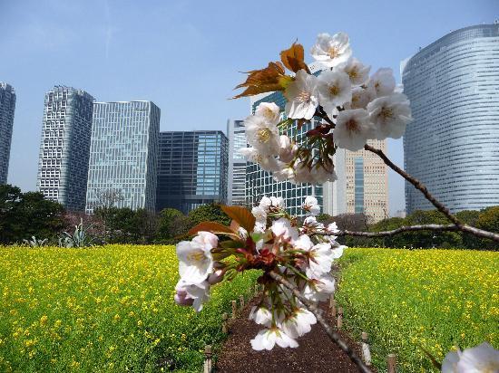 Tokio, Japan: Hama Garden