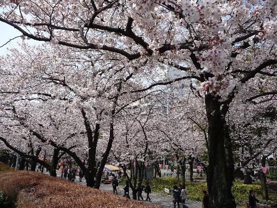Tokio, Japan: Suminda Park