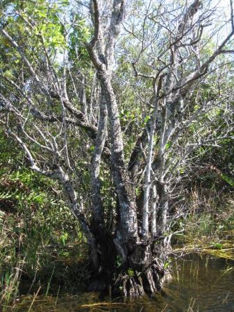 Miccosukee, FL: Everglades