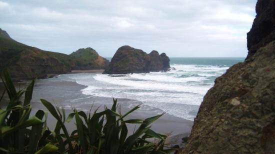 Dunedin Photo