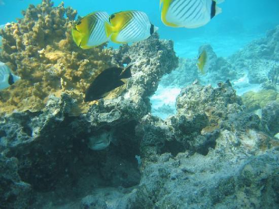 Aitutaki Lagoon: Underwater world