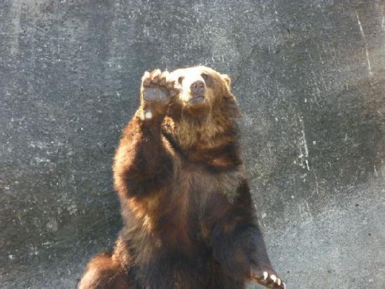 Aso, Japón: エサを要求するクマさん