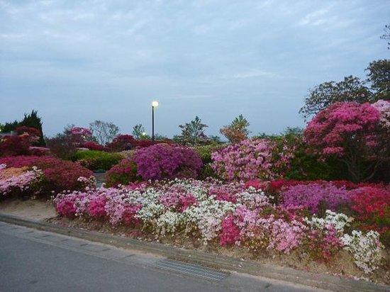 Kurume, Japan: 満開のつつじ