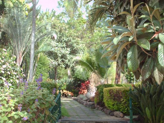 diverhotel Tenerife Spa & Garden : Jardín tropical