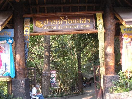 Maesa Elephant Camp: entrance