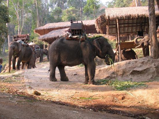 Maesa Elephant Camp: elephant