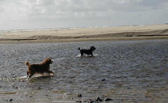 Land's End at Cannon Beach: dogs enjoying Ecola Creek right outside Land's End