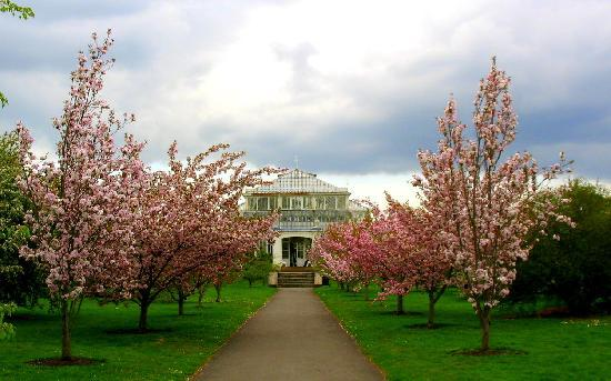 Royal Botanic Gardens, Kew: Love the cherry blossoms!