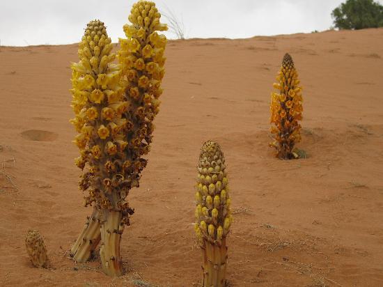 Kasbah Le Touareg: fleur du désert