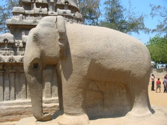 Mahabalipuram, Inde : Built from a single chunk of stone, this elephant is about 11 feet tall.