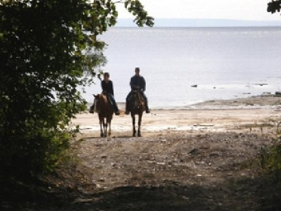 Port Colborne, Canada: Horseback ride along the beach