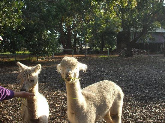 Dunsborough Rail Carriages & Farm Cottages: Loved these guy's soooooooooooooo cute