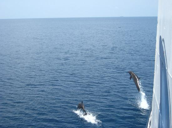 Chez Felix Hotel & Restaurant : Dolphins taken from the ferry from Sumbawa.