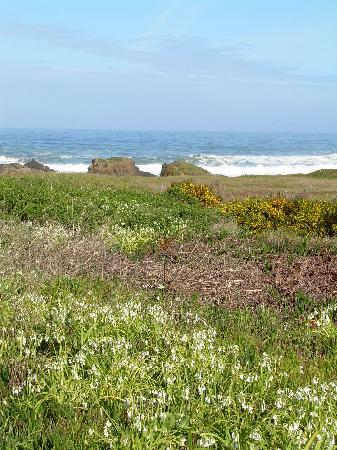 Country Inn Bed & Breakfast: Walk to Glass Beach