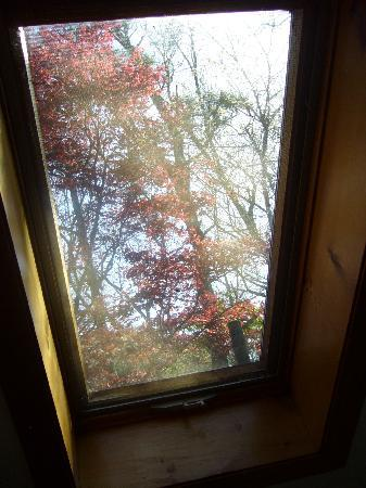 Morgan's Rest Bed & Breakfast: looking thru the skylight