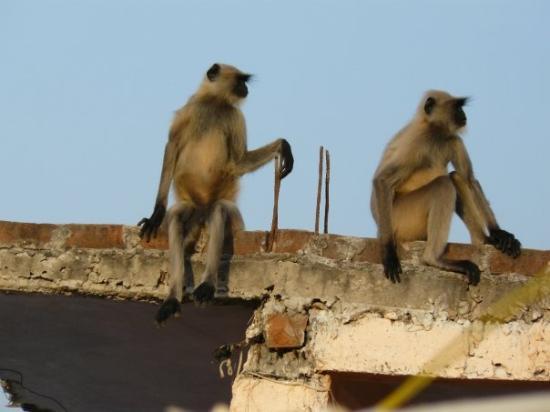 Ιντόρε, Ινδία: la class..!!!