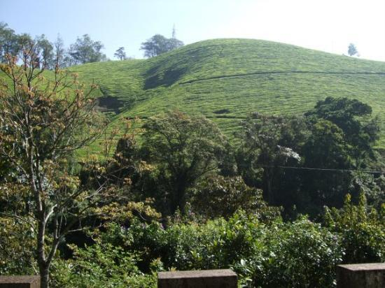 Munnar Photo