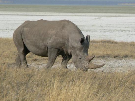 Bilde fra Etosha National Park
