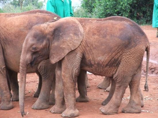 Nairobi, Kenya: KENYA 2009 - The Elephant Sanctuary