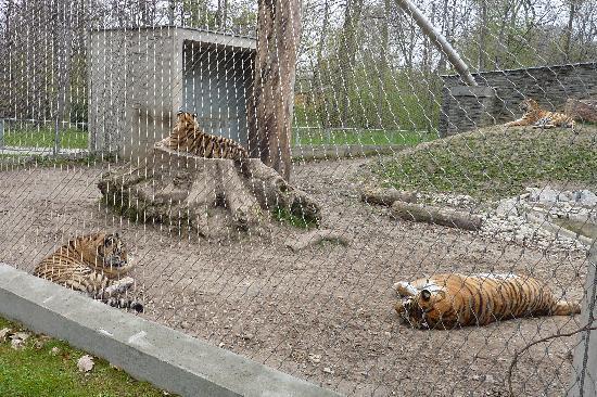 Krakow Zoo (Ogrod Zoologiczny): Tigers enclosure