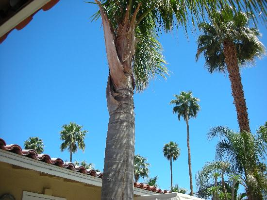 La Dolce Vita Resort & Spa: Plenty of palm trees overlooking the grounds