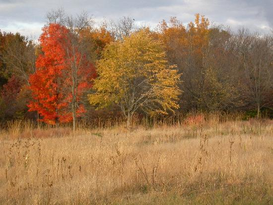 Little Bluff Inn : Fall colors in Perrot Park