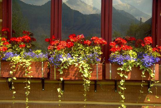 Teton View Bed & Breakfast : Reflection of mountains!