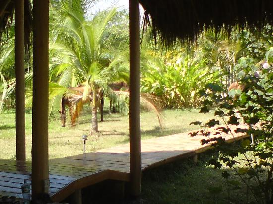 Nautilus Boutique Hotel: view from the yoga studio