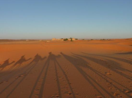 Casablanca, Marokko: Another one of those camel shadow shots.