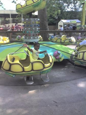 Cat riding the Turtles at Coney Island