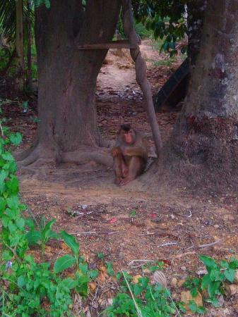 Κο Λαντά, Ταϊλάνδη: Ko Lanta 2007