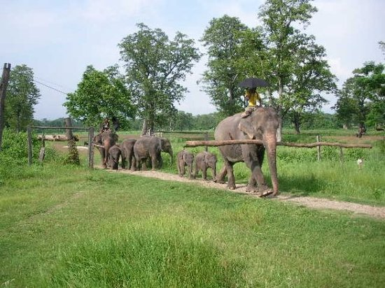 Restaurantes en Chitwan National Park