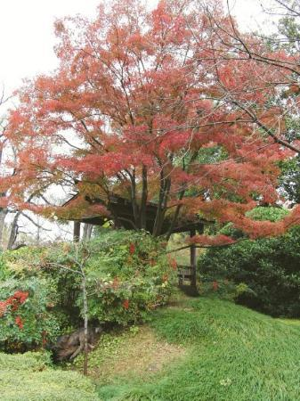 Fort Worth Botanic Garden Photo