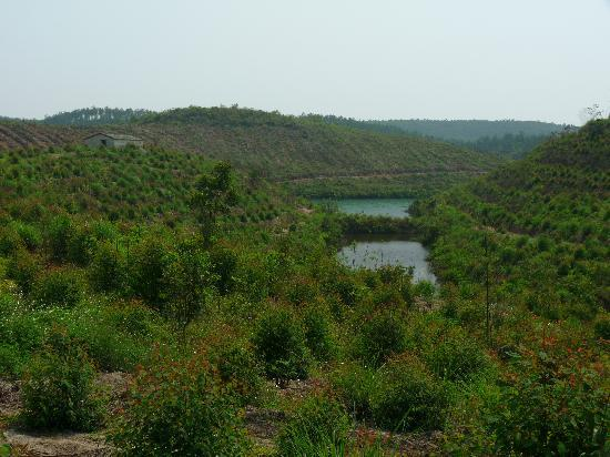 Star Island Lake (Xing Dao Hu): Countrysite