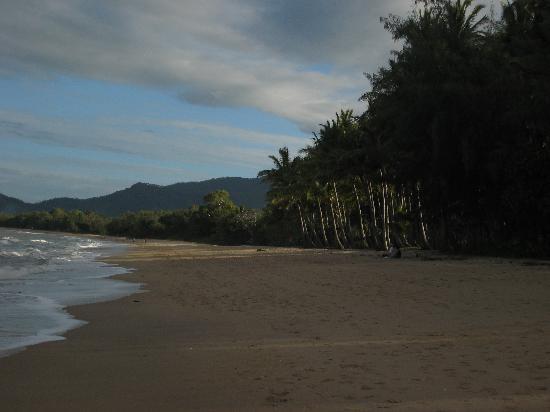 Palm Cove Tropic Apartments: Nearby beach