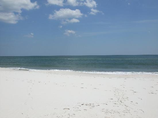 SeaChase: Orange Beach