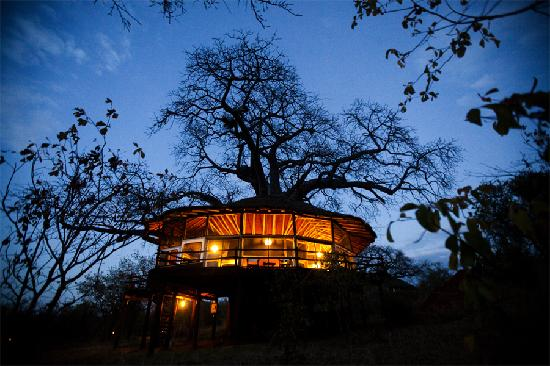 Tree house at Tarangire Treetops