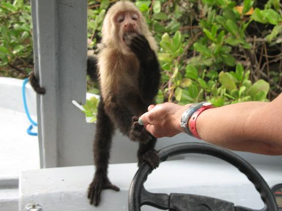 Occidental Grand Papagayo by Barcelo: Cute Capuchin on Palo Verde tour